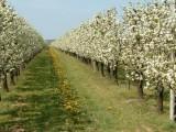 Piante in fioritura... Azienda Agricola Costa