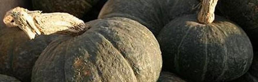 zucca varietà delica - Azienda Agricola Costa
